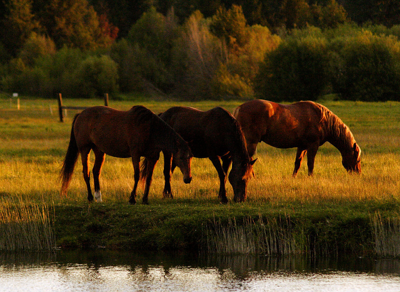 horses-in-sunlight-060506-k.jpg