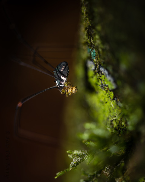 SPIDER - eating another-1395.jpg