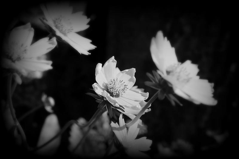 LTD_2011-04-05_0018b&w_2