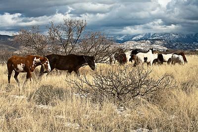 Cochise & Geronimo Territory