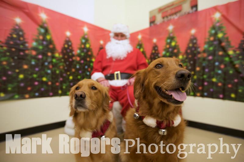 Santa Photos Rocket Dog Rescue