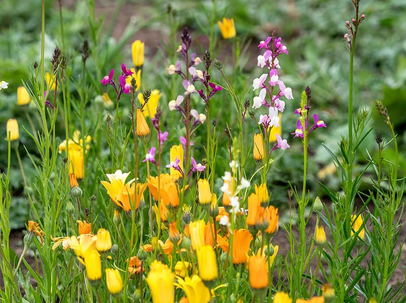 wildflowers0310.jpg