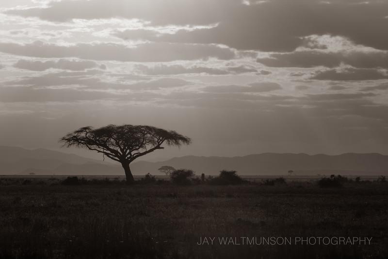 Jay Waltmunson Photography - Kenya 2019 - 168 - (DSCF5120).jpg