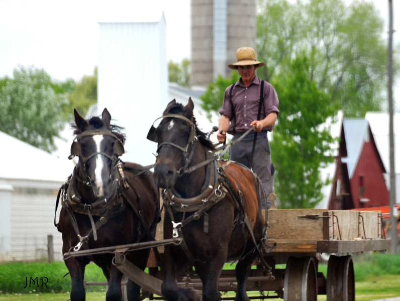 Amish Team on the road. .jpg