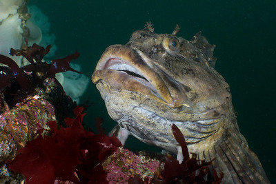 Edmonds Underwater Park 2013-12-14