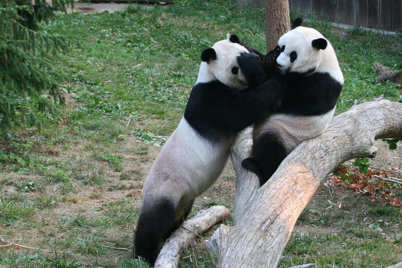 Panda080407_0019.JPG