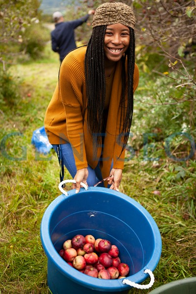 Fall into Fall Apple Picking (Photos by Udeshi Seneviratne)