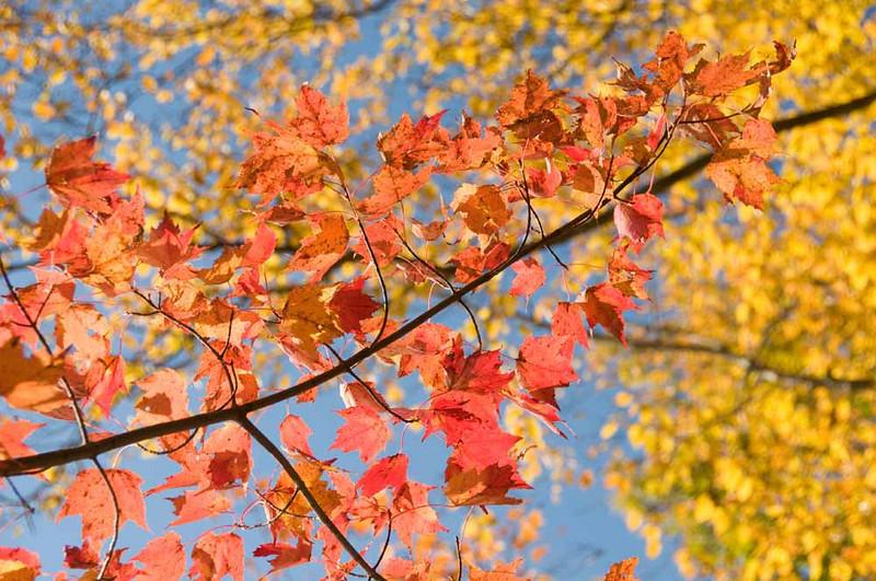bright-autumn.jpg
