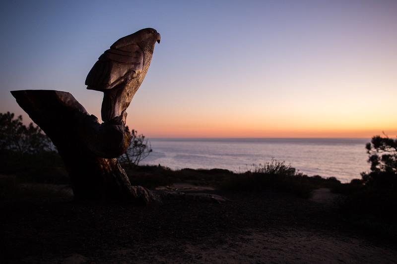 Torrey Pines Beech Night-6.jpg