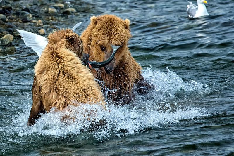 Alaska_2013_FH0T9635.jpg