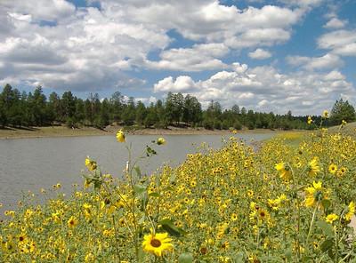August 8, 2006: Ashurst Lake area, northern Arizona