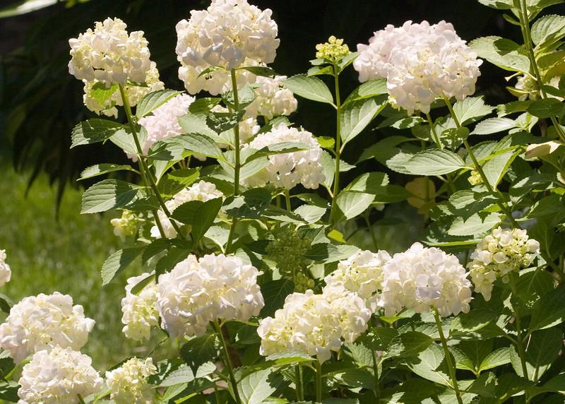 2009 06 30_NY Botanical Gardens_0659_edited-1.psd