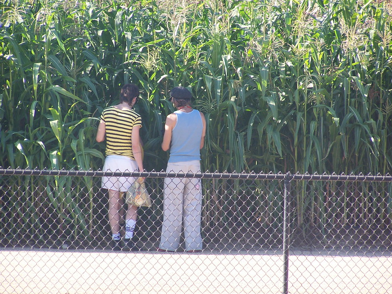 A field of corn covering almost the entire site of the Los Angeles State Historic Park was the main component of Lauren Bon's Not-A-Cornfield project.