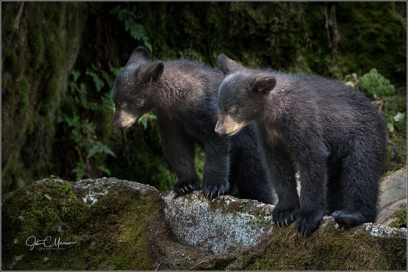 J85_6472 cubs watching mom L W.jpg