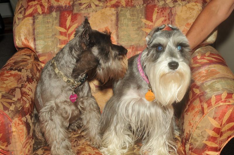 Suzie's Dogs