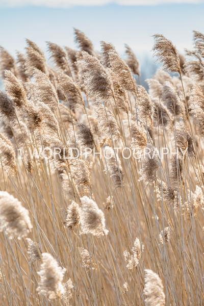 202011202020_11_20 Tall Pampas Grass071--1.jpg