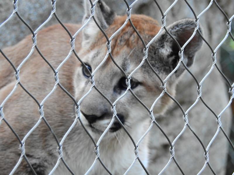 Cheyenne Mtn Zoo 2019 (1210).JPG