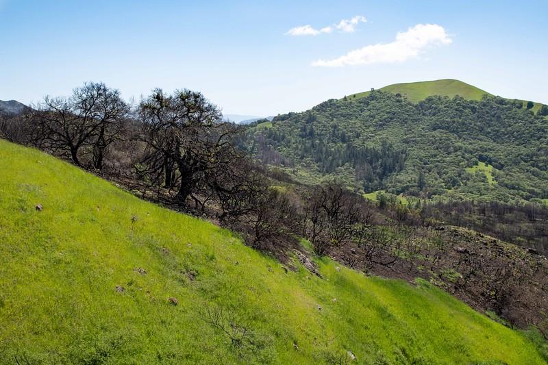 Sonoma County, California