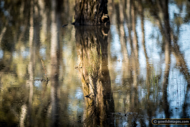 Flooded Reflections