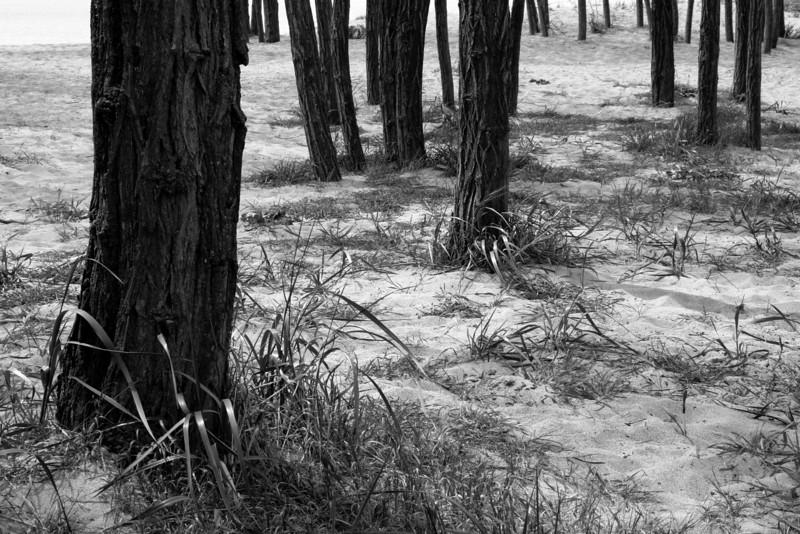070518-005BW (Treescape).jpg