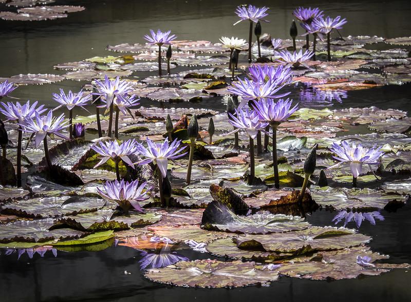 June 10 - Skirball flowers.jpg
