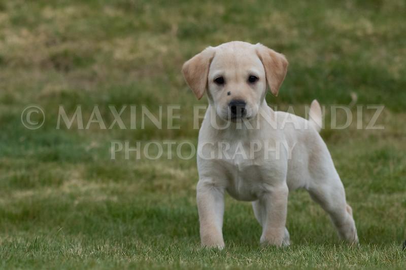 Weika Puppies 24 March 2019-6679.jpg