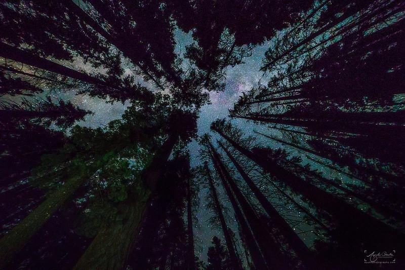 08_10-13_2017_YosemiteHalfDome_milkyway-1.jpg
