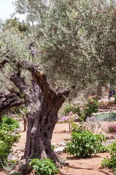 Israel_1618.jpg