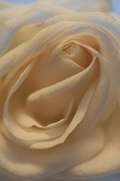 Beyond Roses