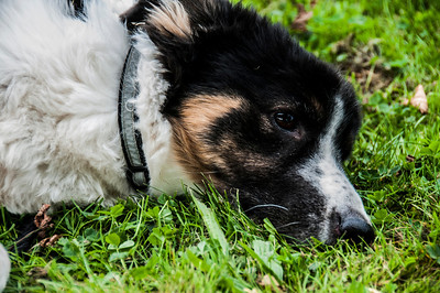 19.08.2012-Hund in der Buga