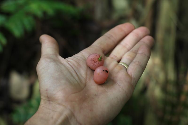 Poisonous berries  @ ManorA