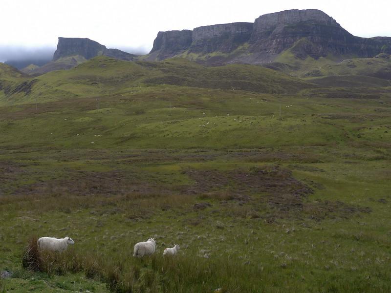@RobAng Juni 2015 / Flodigarry, Isle of Skye / Flodigarry  (Inner Hebridies), Scotland, GBR, Grossbritanien / Great Britain, 84 m ü/M, 2015/06/20 13:17:36