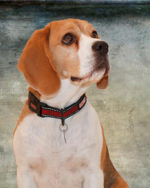 Brody Portrait