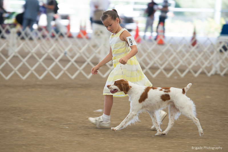 2019 Malibu Kennel Club-0198.jpg