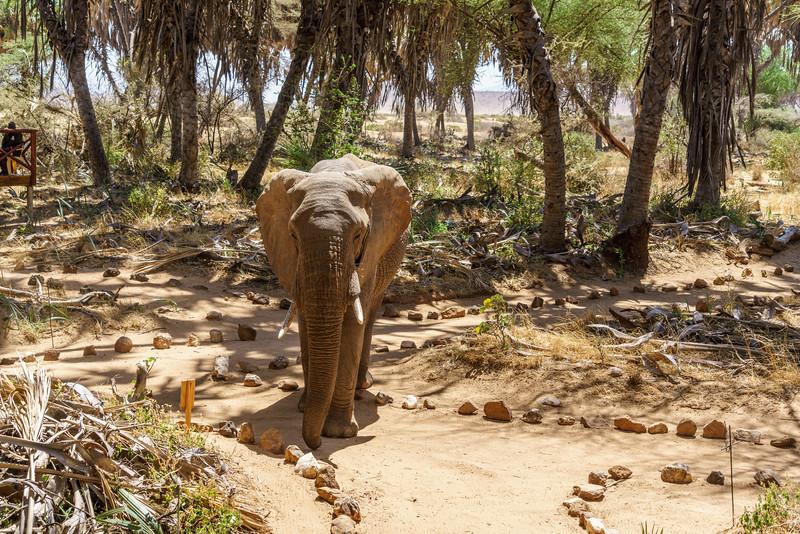 Kenya 2015-01673.jpg