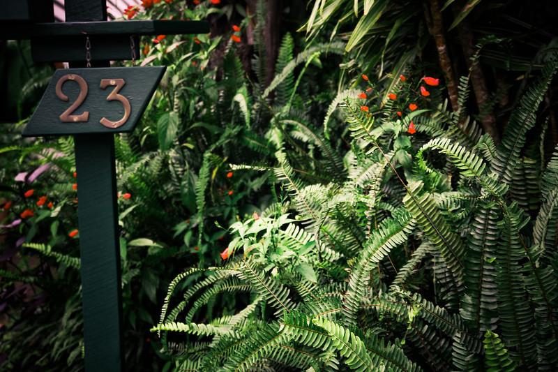 garden (6).jpg