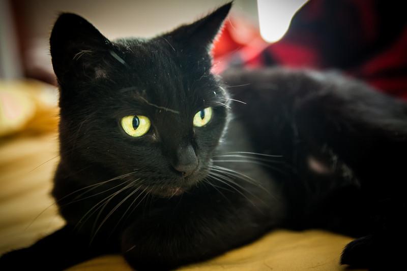 cats-feb-2013-29.jpg