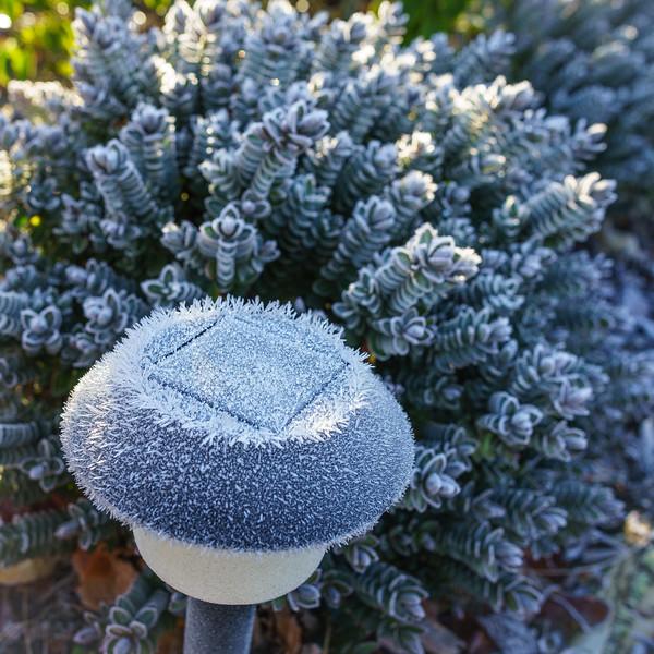 Frost 120715-011.jpg