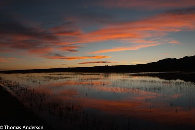 Crane Ponds in the Morning - Bosque Del Apache, N M