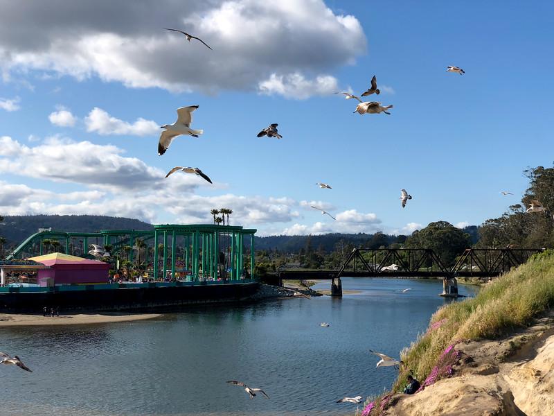 A flock of birds flies over a bluff, by the Santa Cruz Beach Boardwalk, over the San Lorenzo river