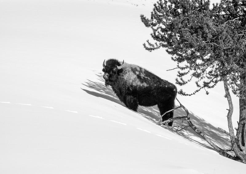 Yellowstone_032.jpg