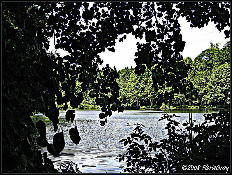 Approaching Her Ladyship's Pond  ©2008 FlorieGray, Wroxton Abbey