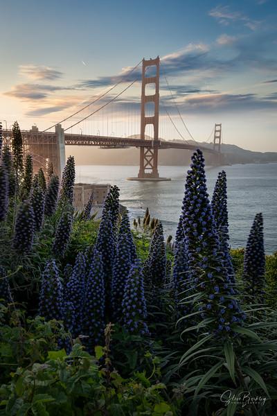 Golden Gate at the Presidio IV