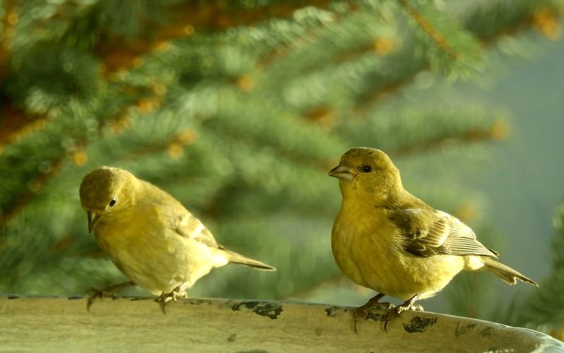 birds (133).JPG