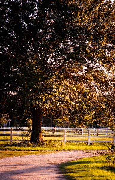 stables-5783.jpg