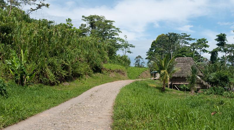Urari, Panama-40.jpg