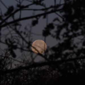 Moon 11/01/2020