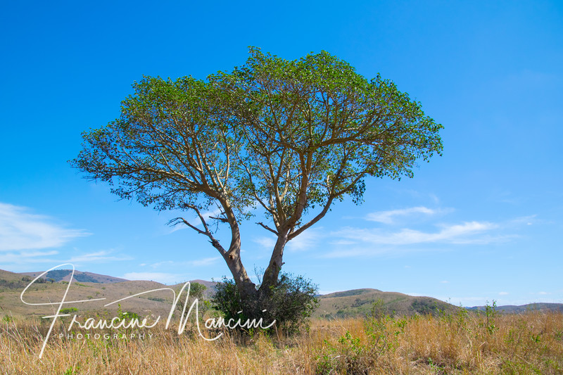 South Africa (2409 of 5206).jpg