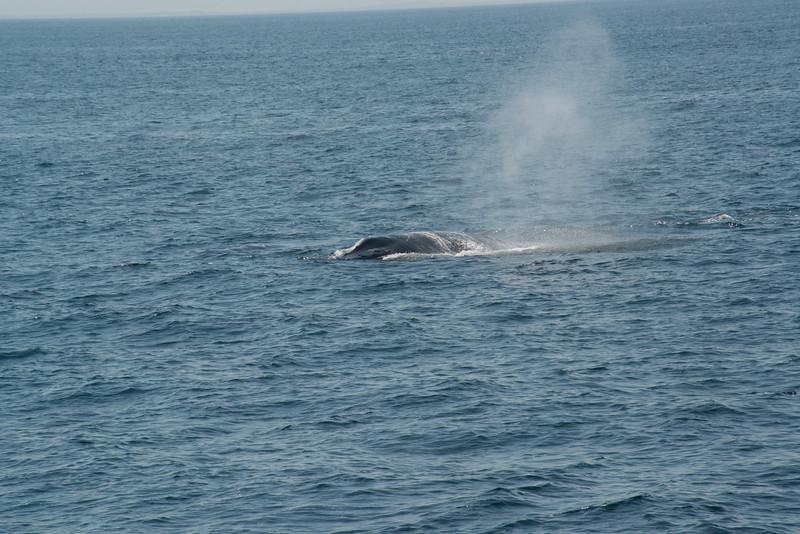 humpbacks-4166.jpg
