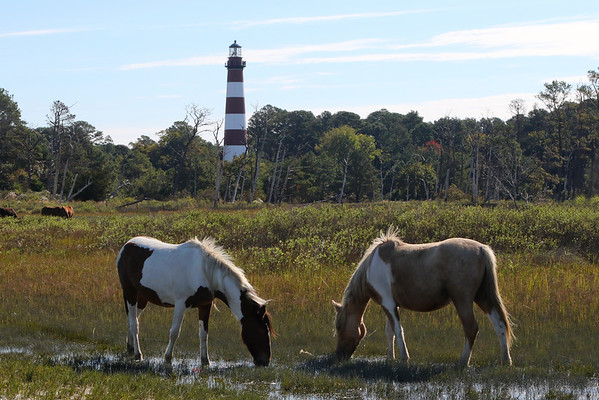 Chincoteague National Wildlife Refuge